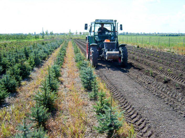 Neupflanzung Christbäume beim Holzerhof