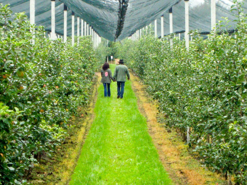 Verliebtes Paar im Obstgarten